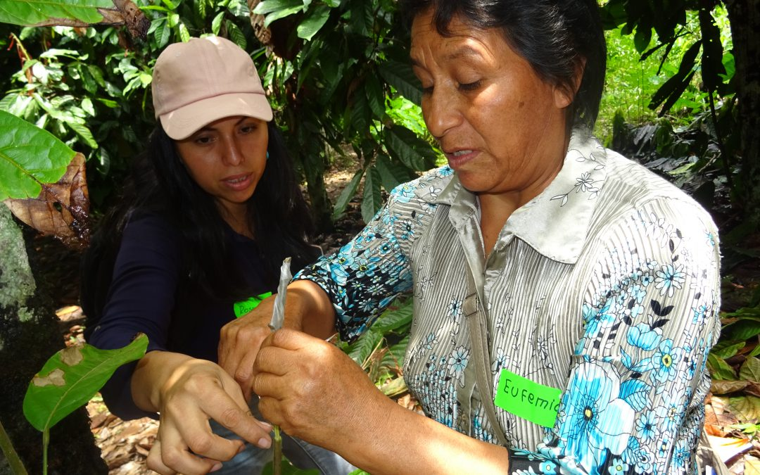 Female empowerment for the future of cacao